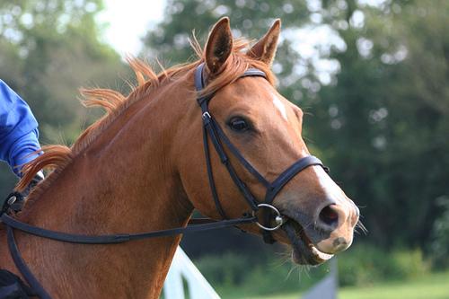 Το άλογο μου «τραβάει» τα ηνία.