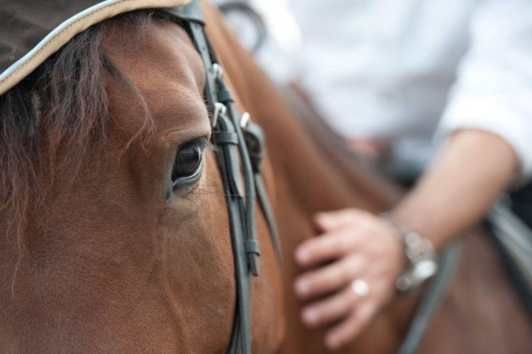Θεραπεία με άλογα για κατάθλιψη και άγχος. (ΈΡΕΥΝΑ)