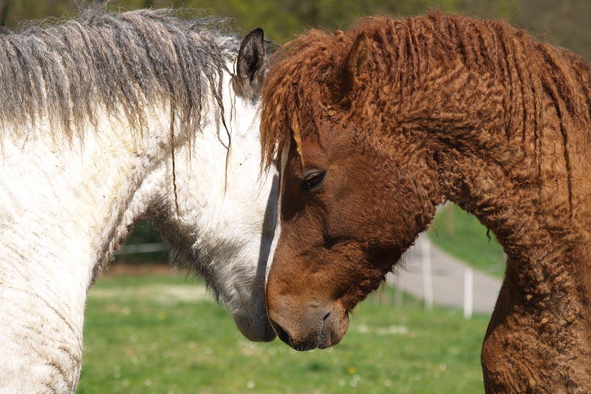 Φανταστικά άλογα και που να τα βρείτε!
