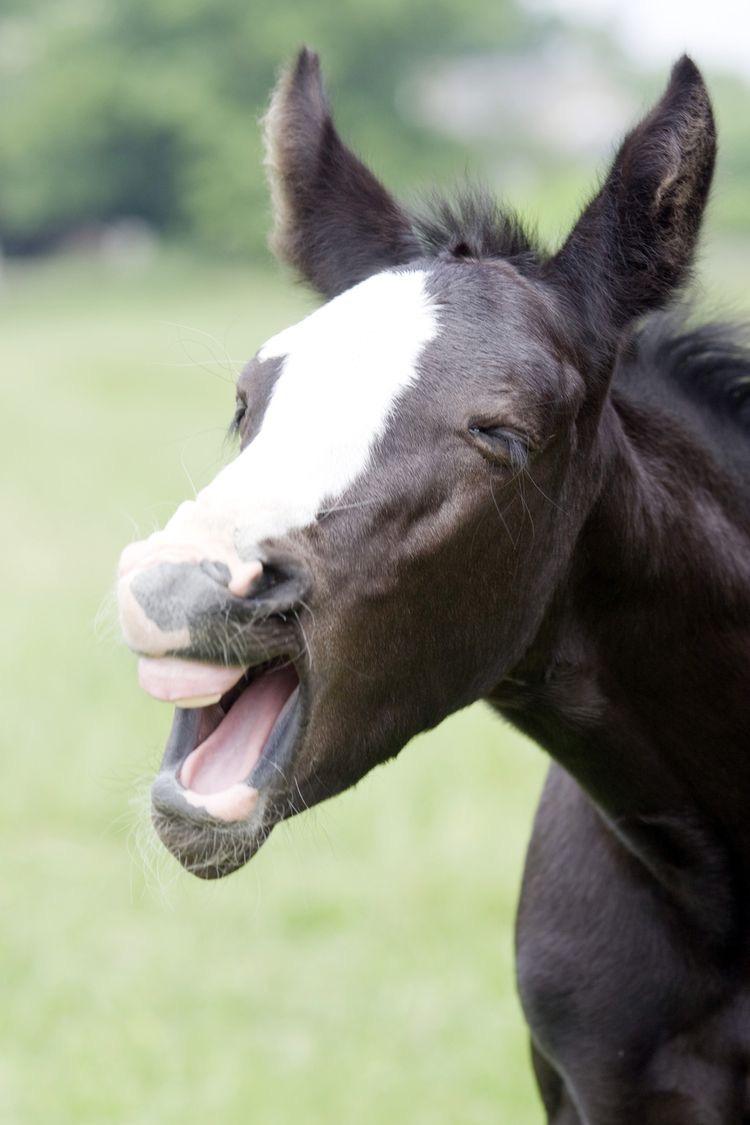 Η ηλικία του αλόγου μου σε ανθρώπινα χρόνια;?